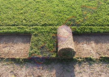 wałek trawy rolowanej z gruntu
