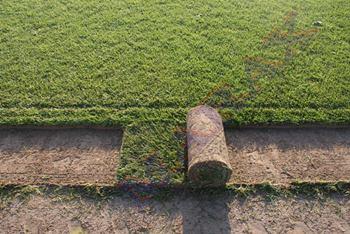 wałek rolki trawy z gruntu