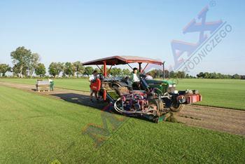 Plantacja trawy rolowanej z gruntu
