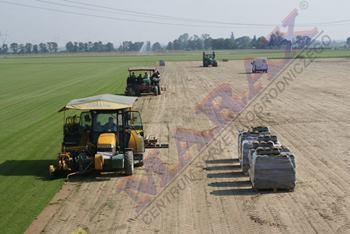 Wycinanie trawy z rolki na plantacji