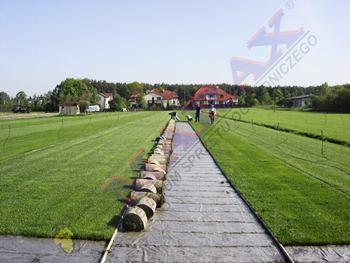 Plantacja trawy rolowanej na folii